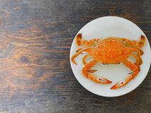 Boiled crab. In white plate on wood surface Stock Photos