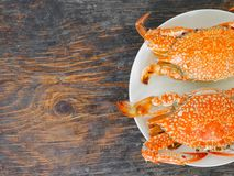 Boiled crab. In white plate on wood surface Stock Photography