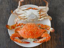 Boiled crab. In white plate on wood surface Royalty Free Stock Photography