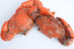 Boiled crab  on white Stock Image