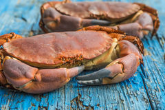 Boiled crab on wooden table Stock Images