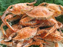 Boiled crabs Royalty Free Stock Photos