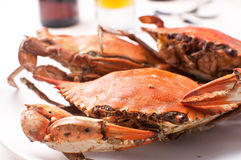 Boiled crabs for dinner Stock Image