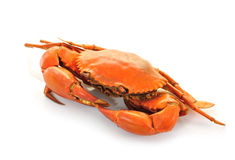 Boiled crabs prepared Royalty Free Stock Image