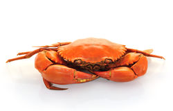 Boiled crabs prepared Stock Images