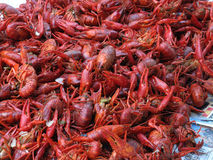 Boiled crawfish. Spread out on newspaper and ready to eat Stock Images