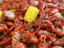 Boiled Crawfish. Horizontal shot of boiled crawfish with corn and potatoes Stock Image