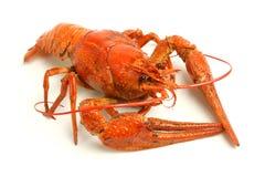 Boiled crawfish Stock Photography
