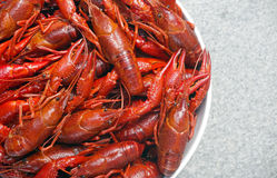 Boiled crawfish Stock Photos