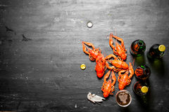 Boiled crawfish with beer. Royalty Free Stock Photos