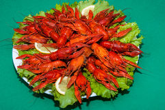Boiled crawfish with beer Stock Image