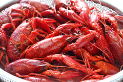 Boiled crawfish, clayfish party Royalty Free Stock Photo