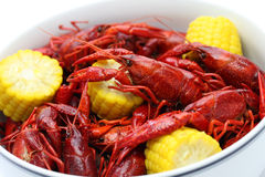 Boiled crawfish, clayfish party Stock Photography