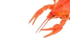 Boiled crawfish Royalty Free Stock Images