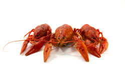 Boiled crawfish. Is isolated on a white background Royalty Free Stock Photos