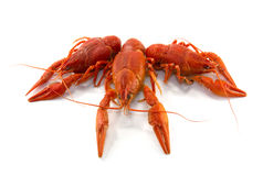 Boiled crawfish. Is isolated on a white background Stock Photo