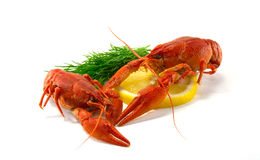 Boiled crawfish. Is isolated on a white background Stock Image