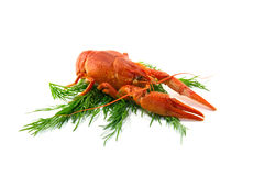 Boiled crawfish. Is isolated on a white background Stock Photos