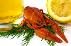 Boiled crawfish. Is isolated on a white background Stock Photography