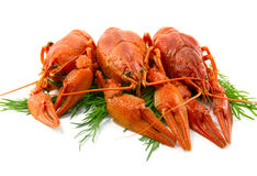 Boiled crawfish. Is isolated on a white background Royalty Free Stock Photography