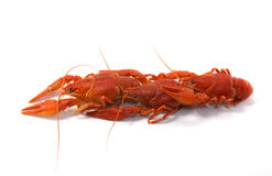 Boiled crawfish. Is isolated on a white background Royalty Free Stock Images