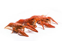 Boiled crawfish is isolated on a white background Stock Image
