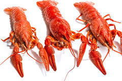 Boiled crawfish is isolated on a white background Stock Photos