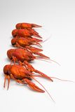 Boiled crawfish is isolated on a white background Royalty Free Stock Photography