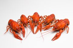 Boiled crawfish is isolated on a white background Royalty Free Stock Photos