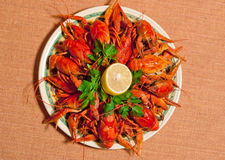 Boiled crawfish Stock Images