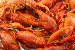 Boiled crawfish. Many cancers are a texture on a white background in full screen Royalty Free Stock Image