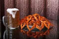 Boiled crawfish and mug with cold beer. On a glass table with reflection royalty free stock photo