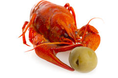 Boiled crawfish with olive Royalty Free Stock Photo