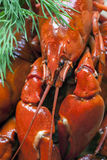 Boiled crawfish Stock Photos