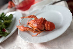 Boiled crawfish on plate Stock Photo