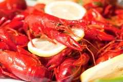 Boiled crawfish on plate close up Stock Photography