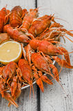 Boiled Crawfish plating Stock Images