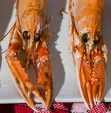 Boiled crawfish served with white wine stock photo
