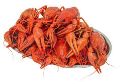 Boiled crawfish. Stacked on a metal plate Stock Images