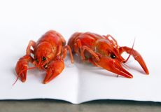 Boiled crawfish on white paper. Boiled crawfish, traditional locale russian food isolated on white paper royalty free stock photos