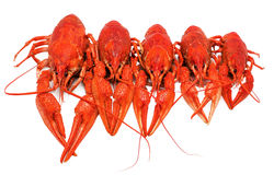 Boiled crawfish on a white background. Red boiled crawfish on a white background Stock Photo