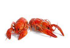 Boiled crawfish on white background. Boiled crawfish, traditional locale russian food isolated on white backgroun stock photography