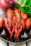 Boiled crawfish. Woden background. Rustic style. Red boiled crawfish on the black rectangular plate. Stock Image