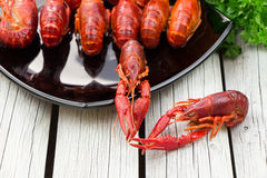Boiled crawfish. Woden background. Rustic style. Seafood menu. Stock Photography