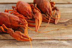 Boiled crawfish on a wooden background Royalty Free Stock Photos