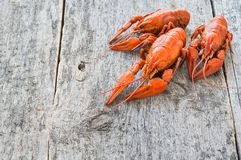 Boiled crawfish on a wooden background. Copy space royalty free stock image