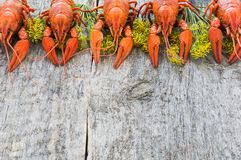 Boiled crawfish on a wooden background. Top view royalty free stock photos