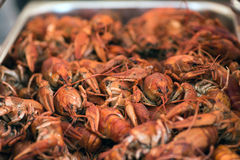 Boiled crawfishes Royalty Free Stock Image