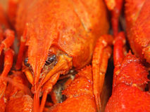 Boiled crawfishes taken closeup. Stock Photos
