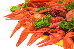 Boiled crayfish. Es on a dish with parsley and dill Royalty Free Stock Photos